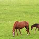 馬プラセンタの効果