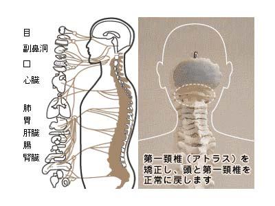 第一頸椎の画像
