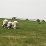 羊プラセンタとは