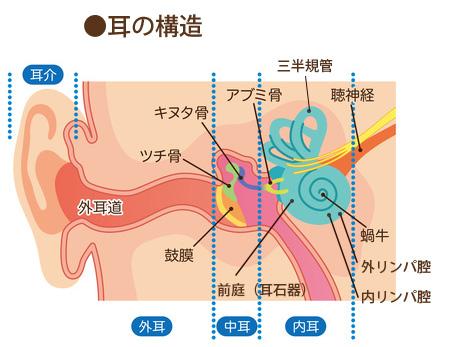 耳の構造の画像