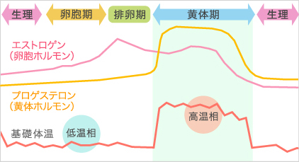 生理周期とホルモンの分泌の相関図