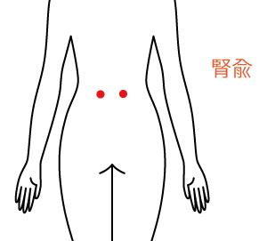 腎兪の位置の画像