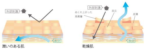 乾燥した肌の画像