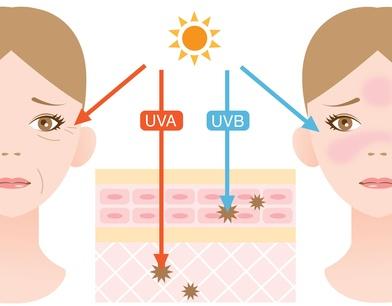 紫外線A派と紫外線B波の比較の図解画像