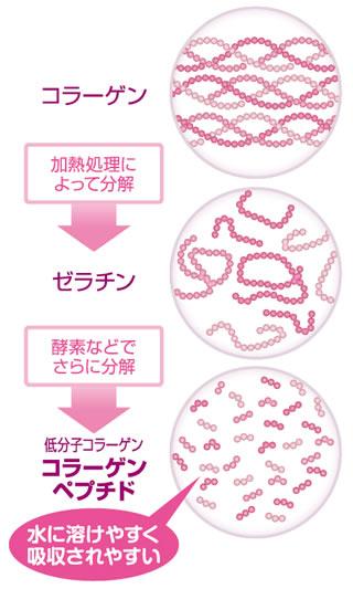 コラーゲン、ゼラチン、コラーゲンペプチドの大きさの画像