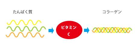 ビタミンCとコラーゲンの関係の画像