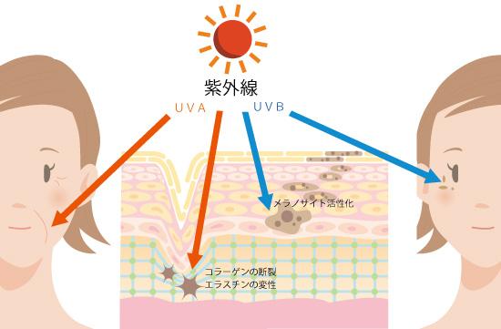 紫外線A派と紫外線B波の比較の図解の画像