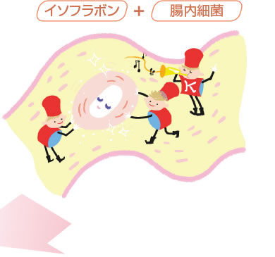 エクオール産生菌の画像