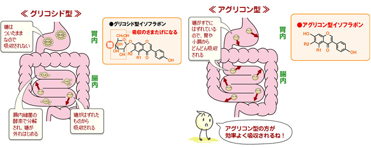 大豆イソフラボンの種類の画像