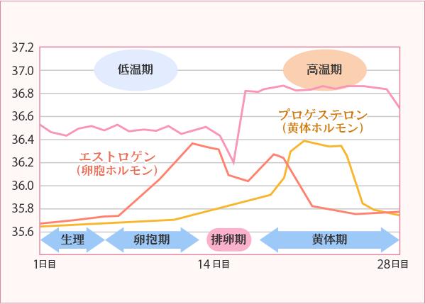 基礎体温のグラフの画像