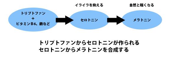 セロトニンとメラトニンの関係の画像