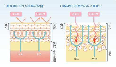 バリア機能の画像