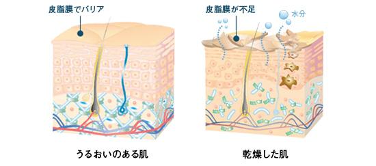 乾燥肌の画像