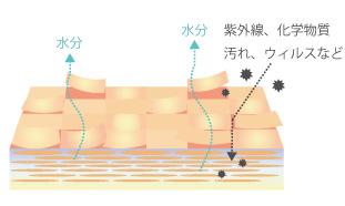 敏感肌の過程の画像