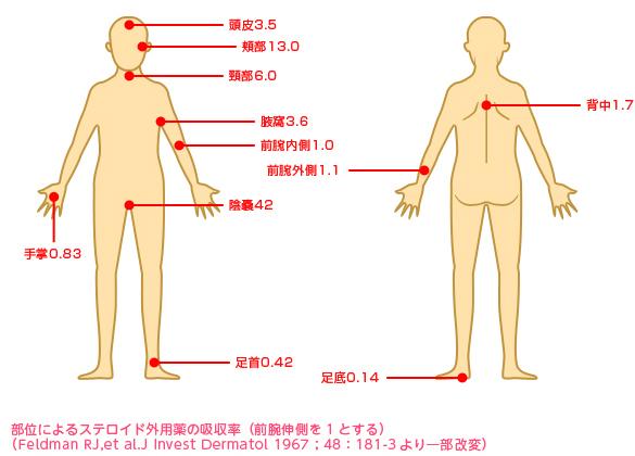 部位別ステロイドの吸収率の画像