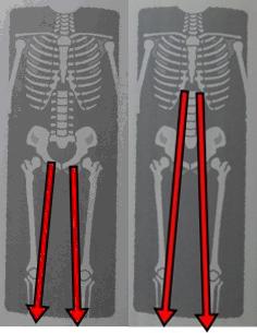 足の生える位置の画像