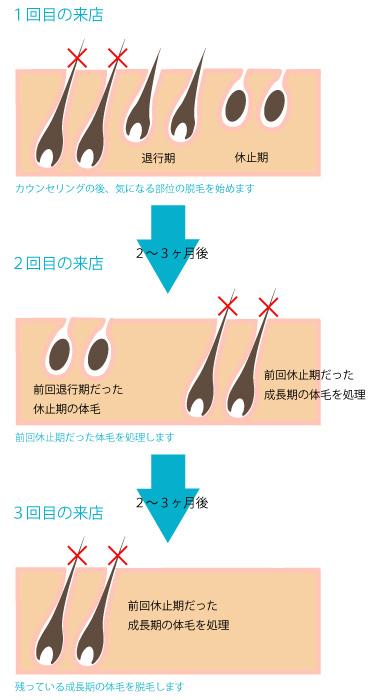 毛周期と回数の画像