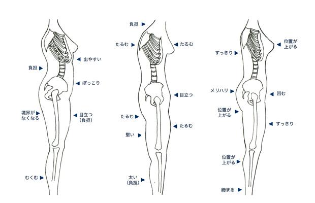 骨盤と体型の画像
