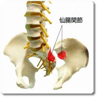 仙腸関節の画像