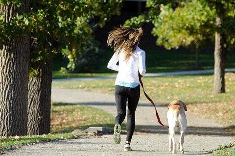 犬と散歩する女性の画像