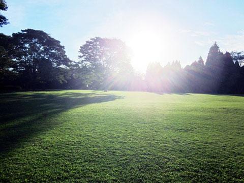 朝の公園の画像
