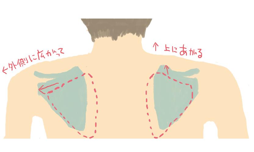 猫背と肩甲骨の画像