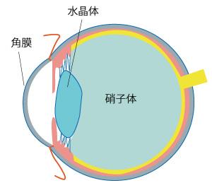 硝子体の画像