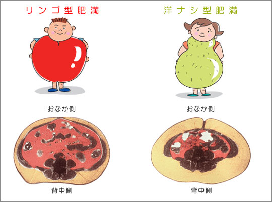脂肪腹の画像