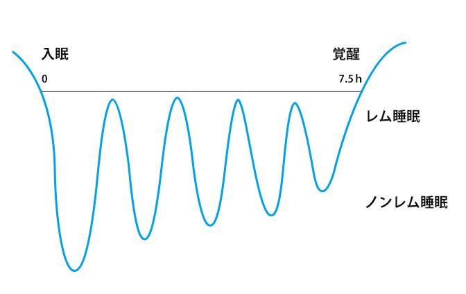 レム睡眠飲ノンレム睡眠のリズムの画像