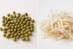 緑豆もやしの画像