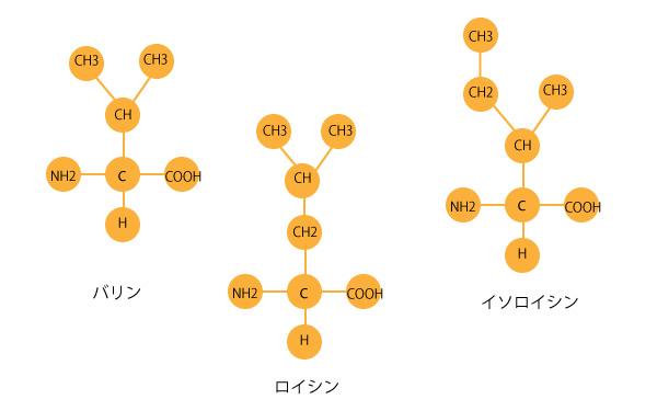 アミノ酸構造式の画像