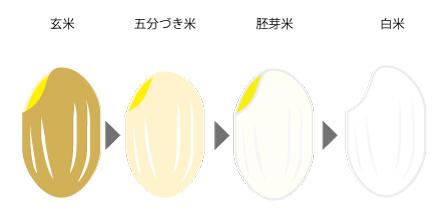 玄米と白米の違いの画像