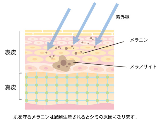 肌を守るメラニンの画像
