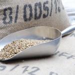 クロロゲン酸でダイエットするには浅煎りコーヒー豆がいい!