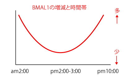 bmal-1の画像