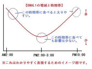 bmal1の画像