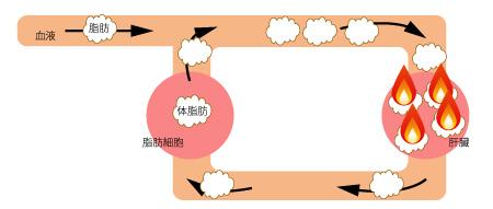 クロロゲン酸の働きの画像