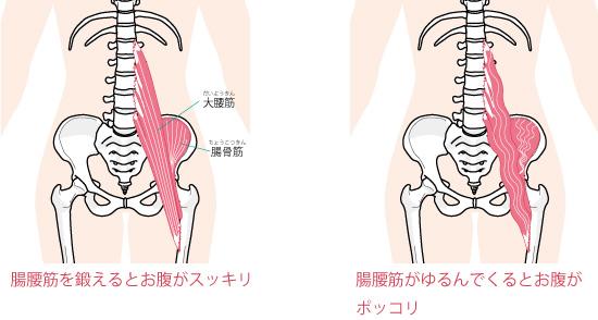 腸腰筋と背骨の画像