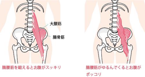 腹筋と大腰筋の画像