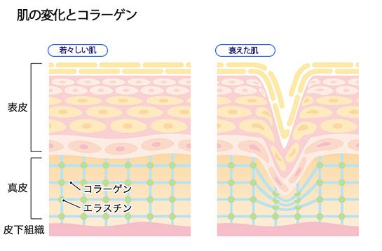 肌の変化の画像