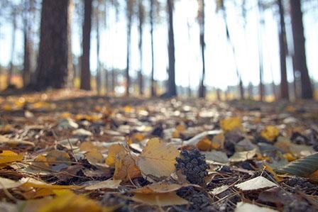 秋冬の画像